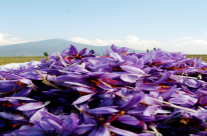 How can I Test Saffron For Purity?